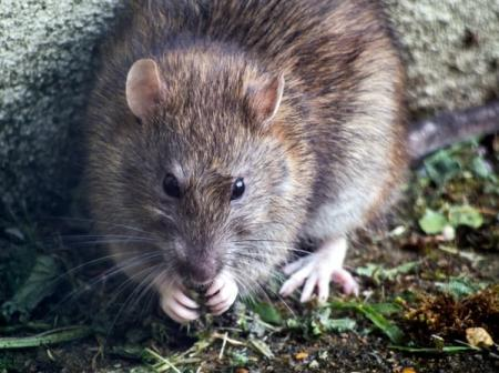Nine Signs You Have a Rodent Problem